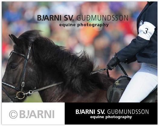 BJARNI SV. GUÐMUNDSSON equine photography